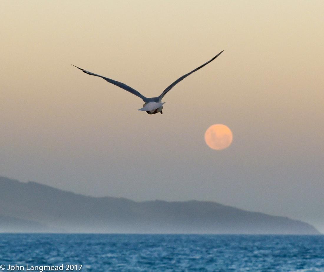 Seagull series-5
