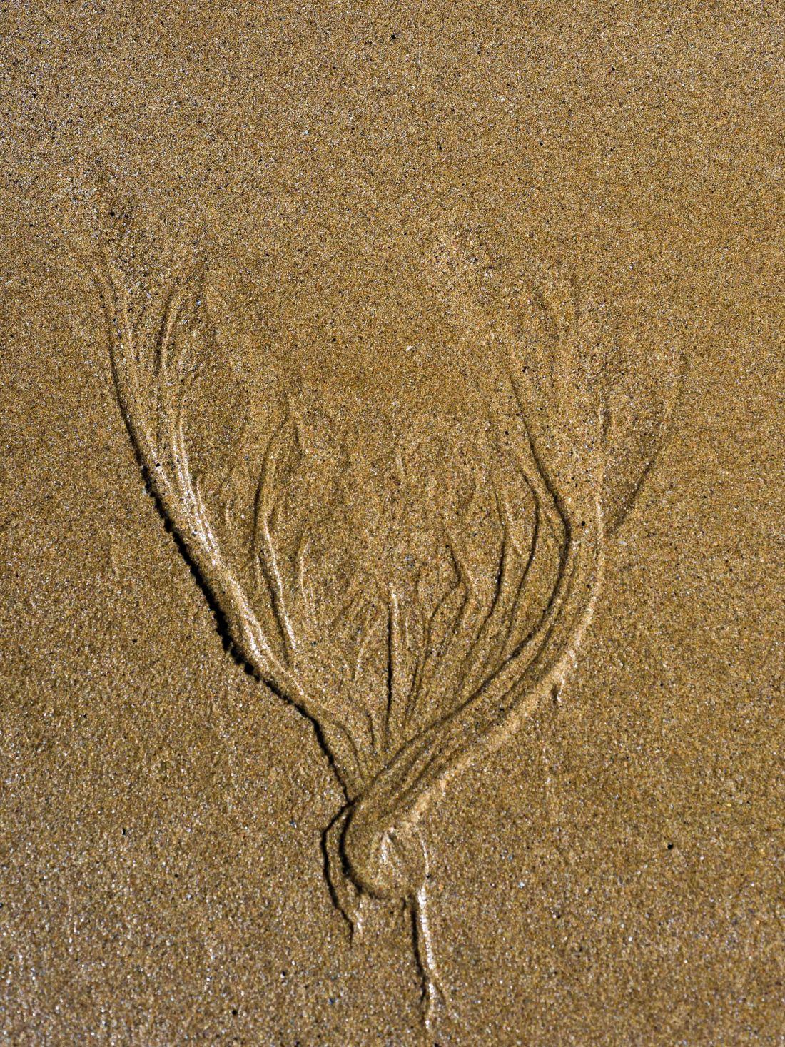 Beach minutiae-6926
