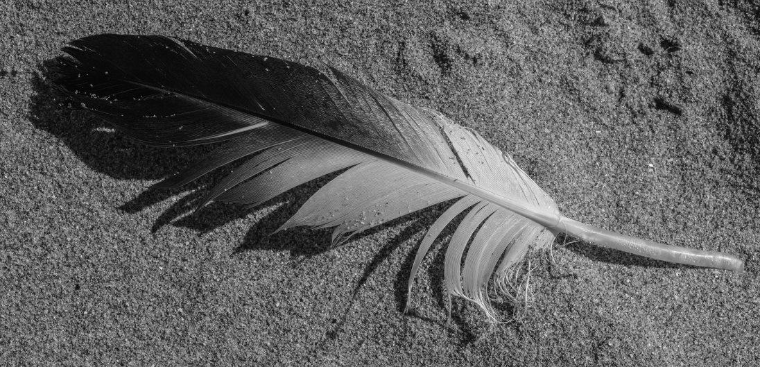 Beach minutiae-6936