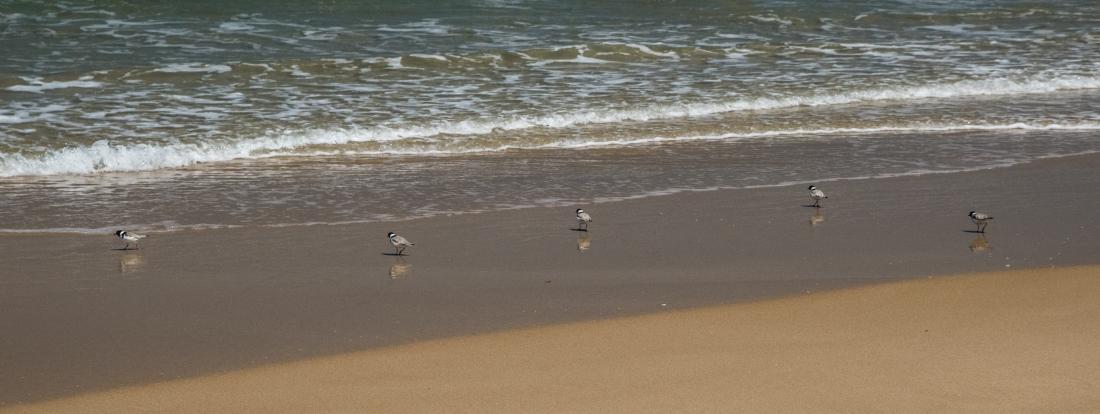 John Langmead_Marengo Beach in Spring_0114_20171119_Online