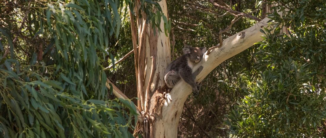 John Langmead_George & koala AB_1325_20180106_Online