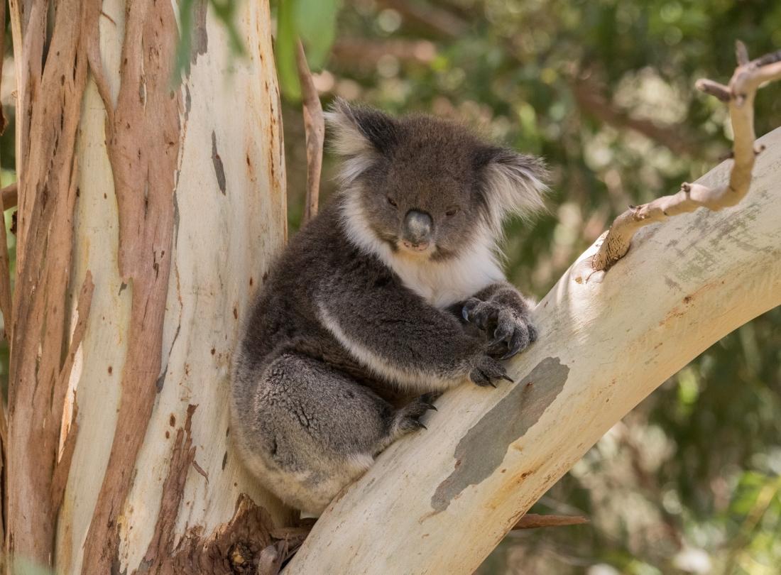 John Langmead_George & koala AB_1327_20180106_Online