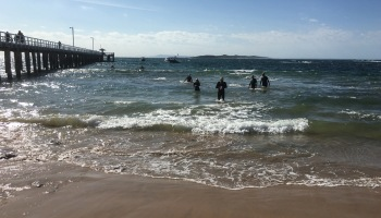 Rip swimmers arriving at Pt Lonsdale jetty