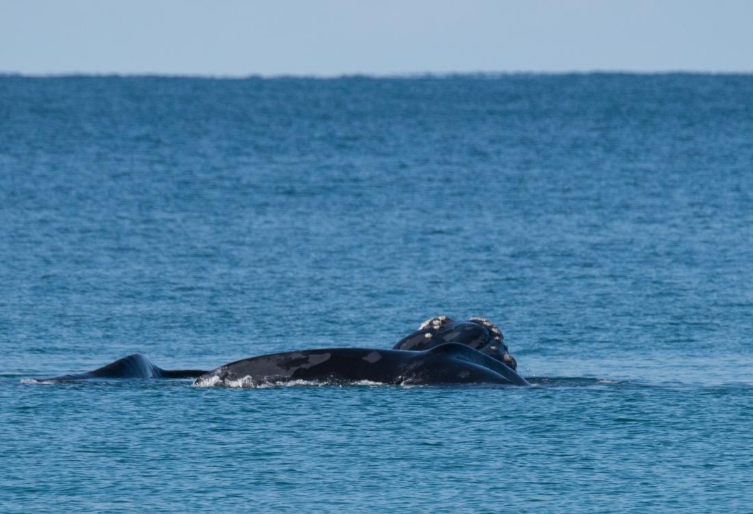 John Langmead_Whales 21 June 2018_5544_20180621_Online