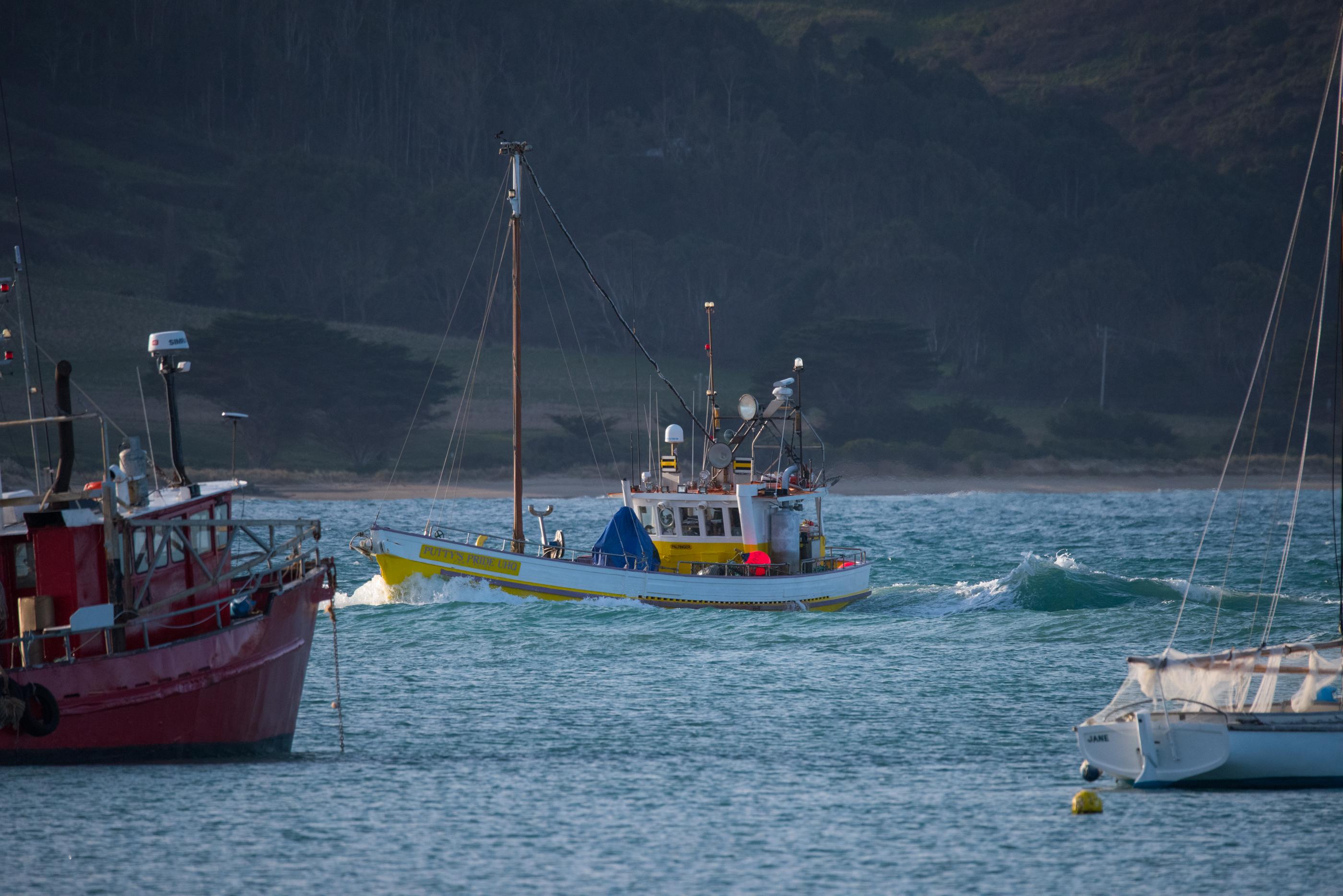 John Langmead_Fishing boat & birds_6158_20180802_Online