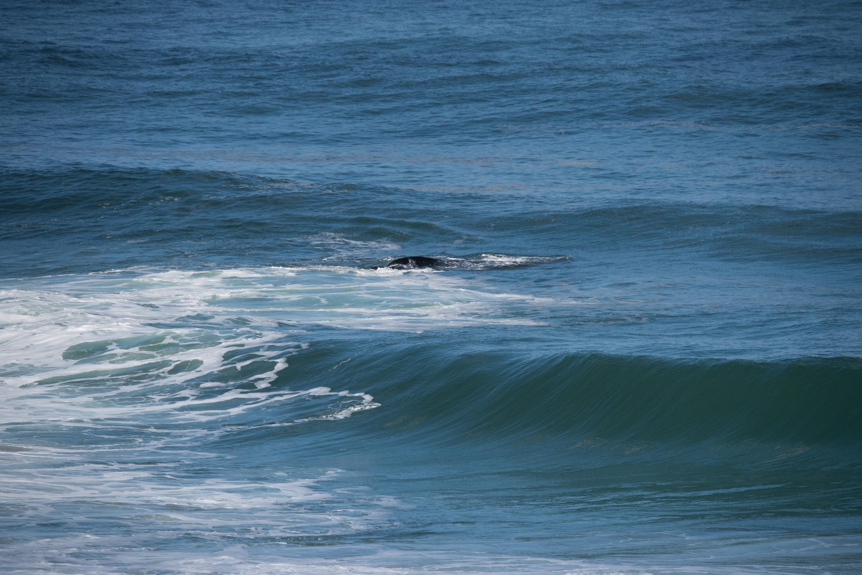 John Langmead_Warrnambool Whales_6440_20180822_Online