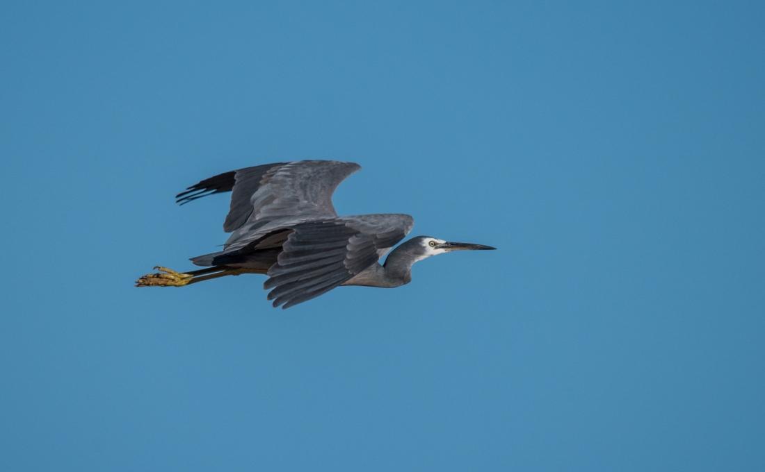 John Langmead_AB dusk birds_7398_20181012_Online