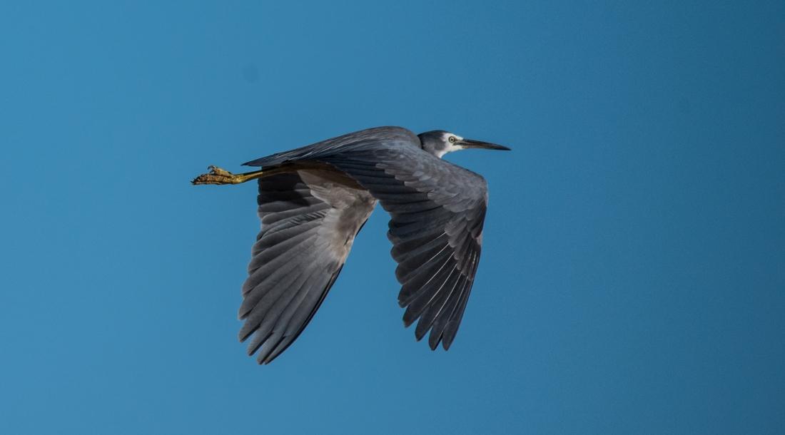 John Langmead_AB dusk birds_7404_20181012_Online