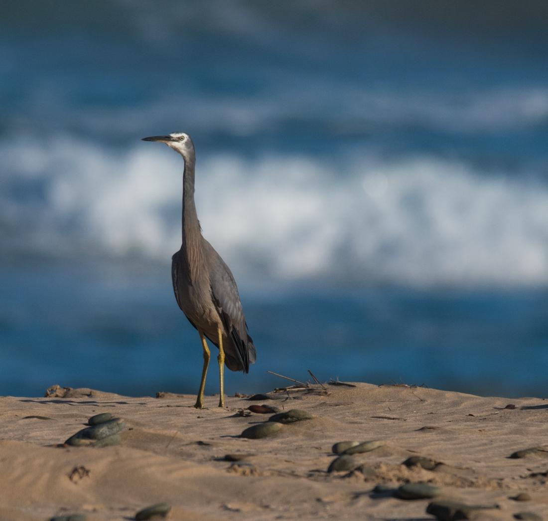 John Langmead_AB dusk birds_7415_20181012_Online