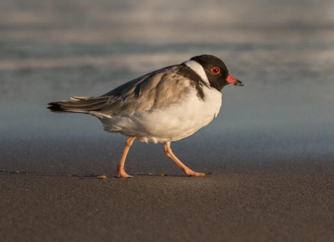 John Langmead_Barham Birds 9.2.18_2024_20180209_Online