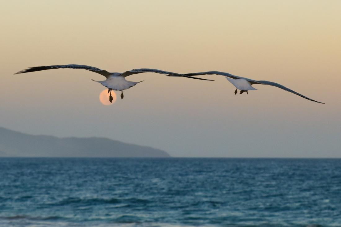 John Langmead_Terrigal Surf Beach_44_20170112_Online