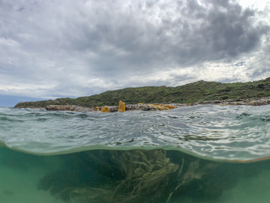 Kelp and reef at Crayfish Bay