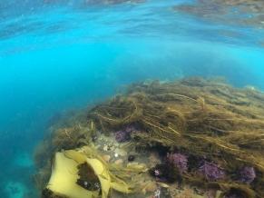 Underwater scenery at Crayfish Bay