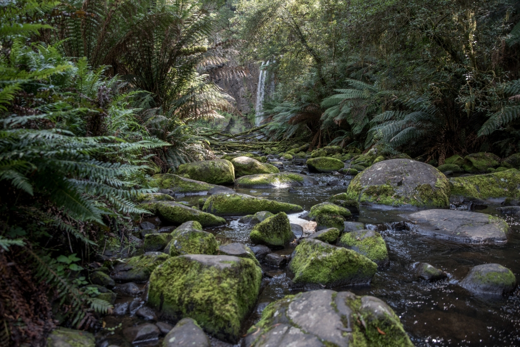 Aire River at Hopetoun Falls in the Otways