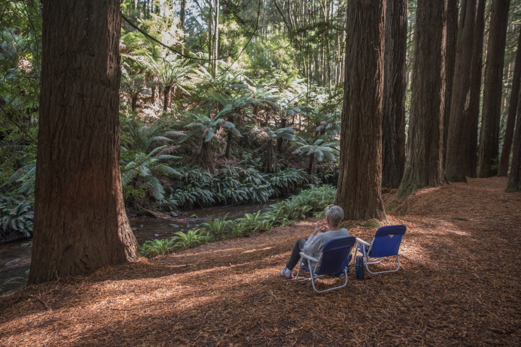 Californian redwoods on the Aire River