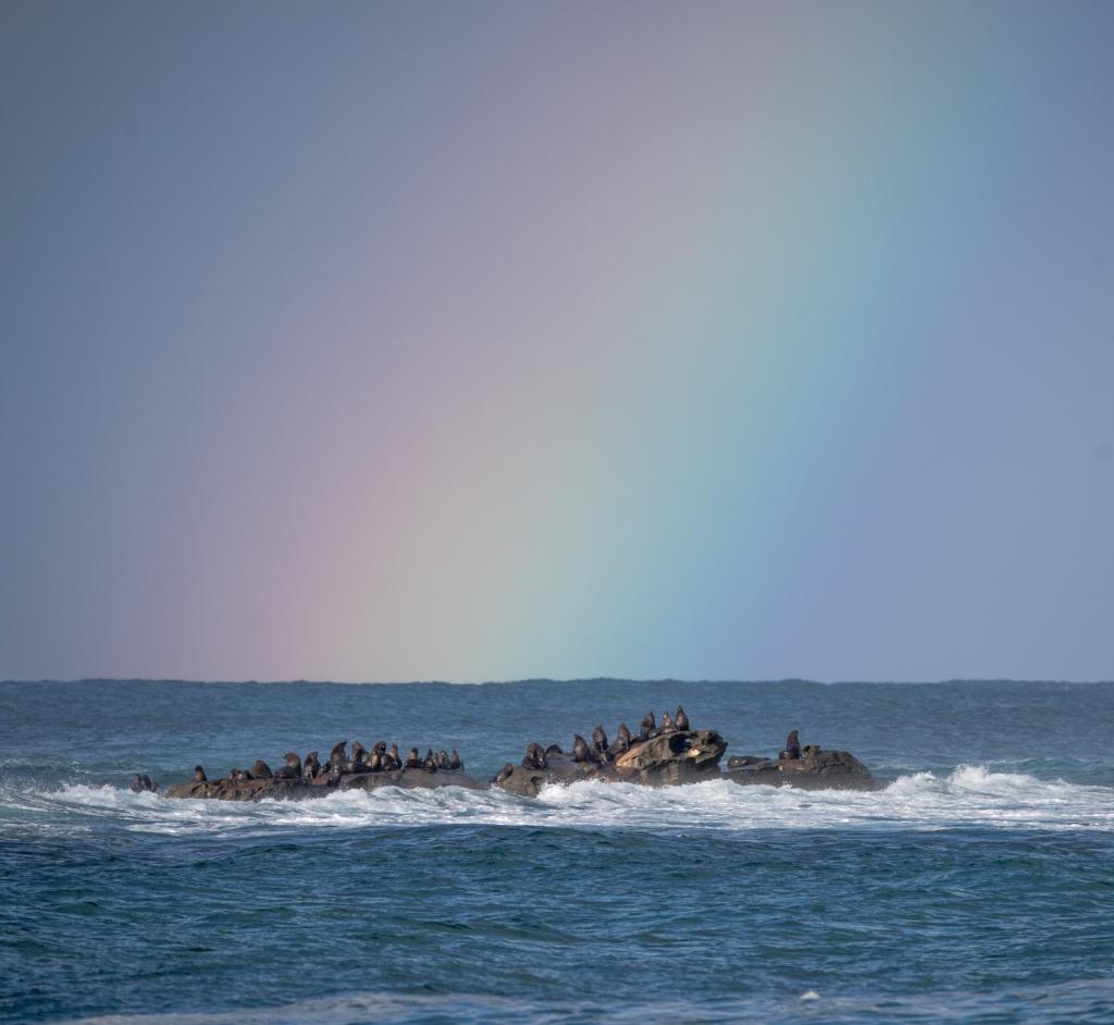Seals on Little Henty Reef, beneath rainbow