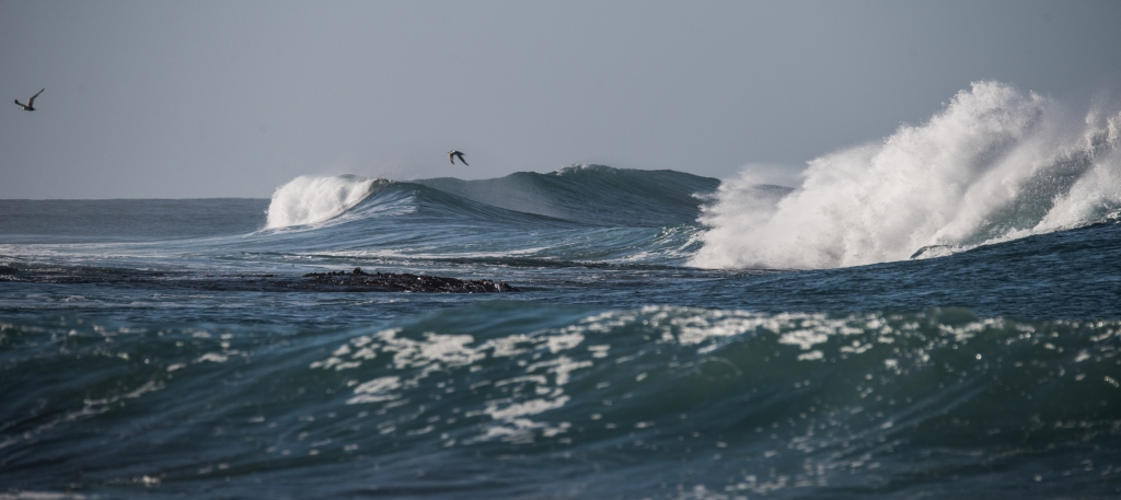 Swell and birds over LIttle Henty Reef