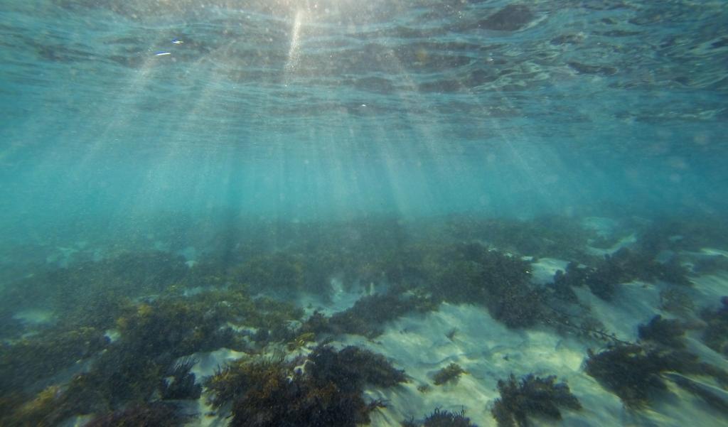 Morning sun rays underwater