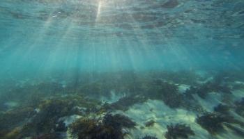 Underwater at Little Henty Reef Marengo