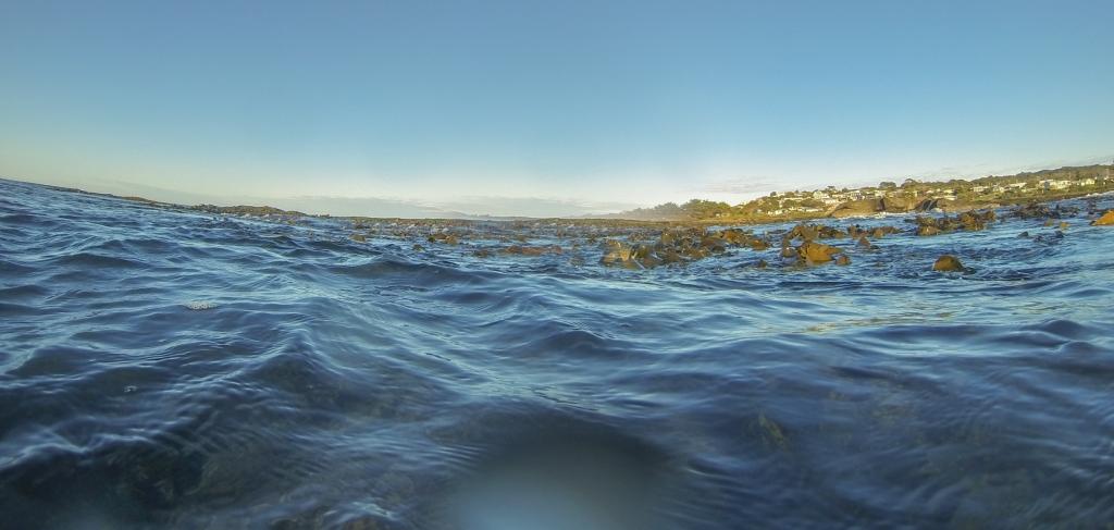 Bull kelp on the surface