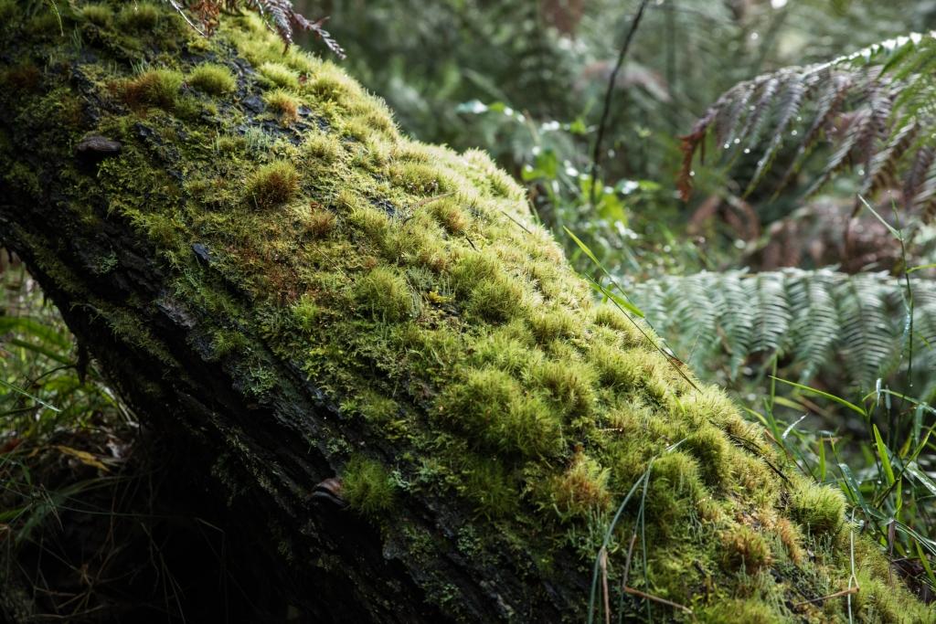 Moss-covered fallen tree