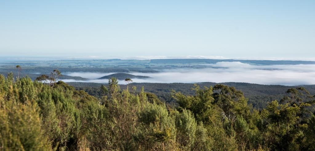 Morning fog in the Otway Ranges