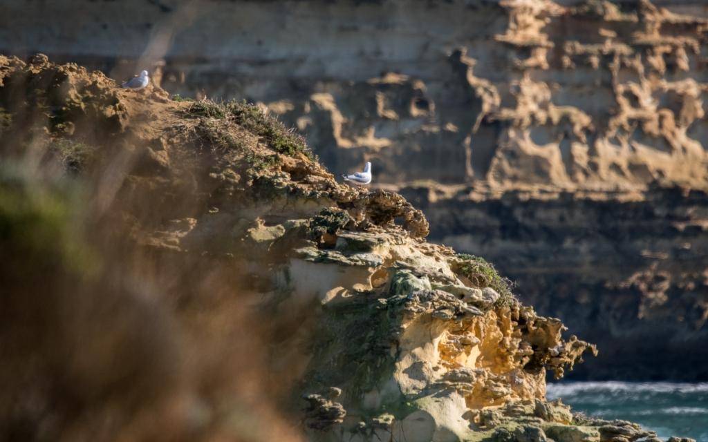 Coastal limestone stack