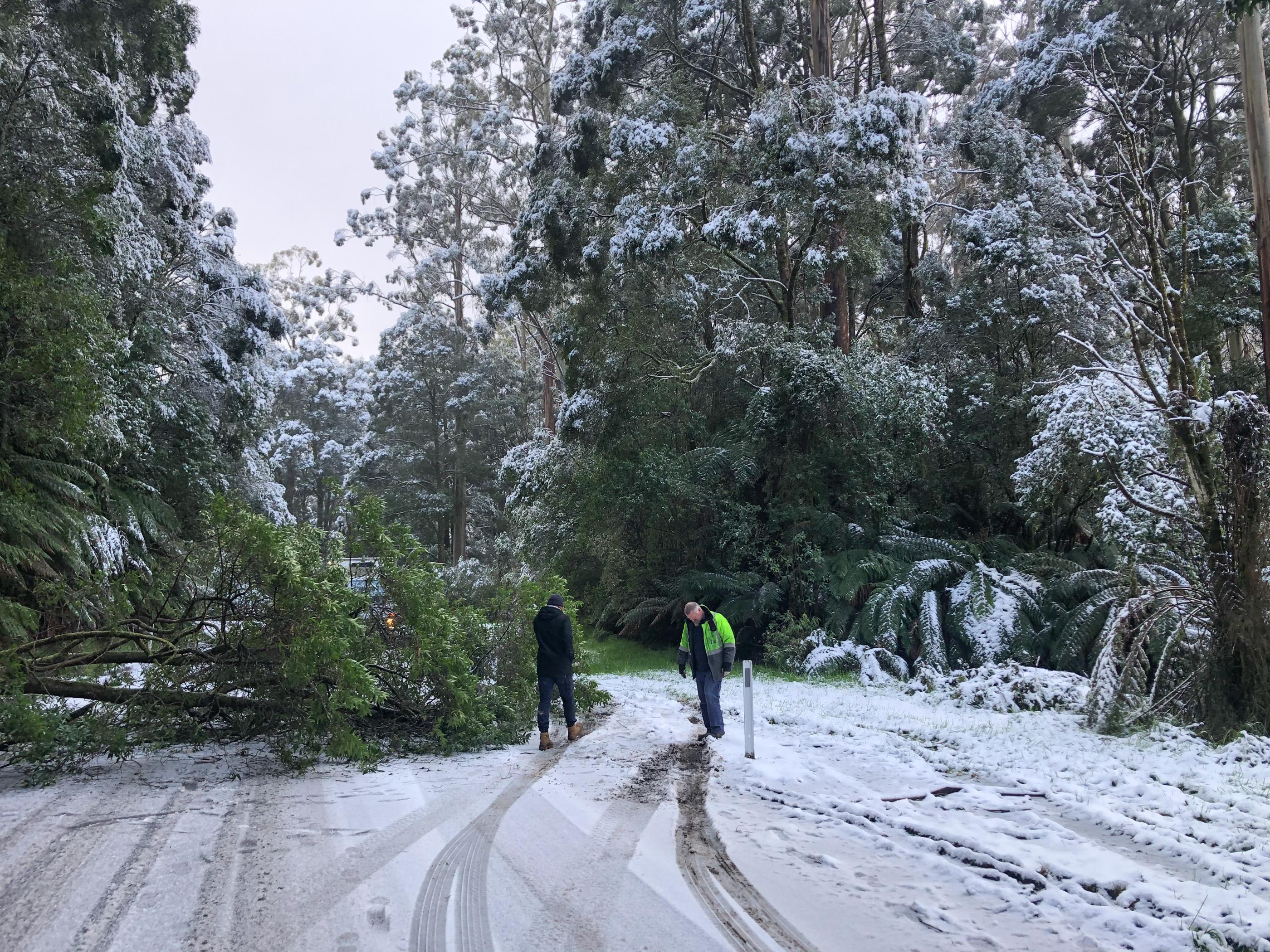 Snow in the Otway Ranges, the Otways