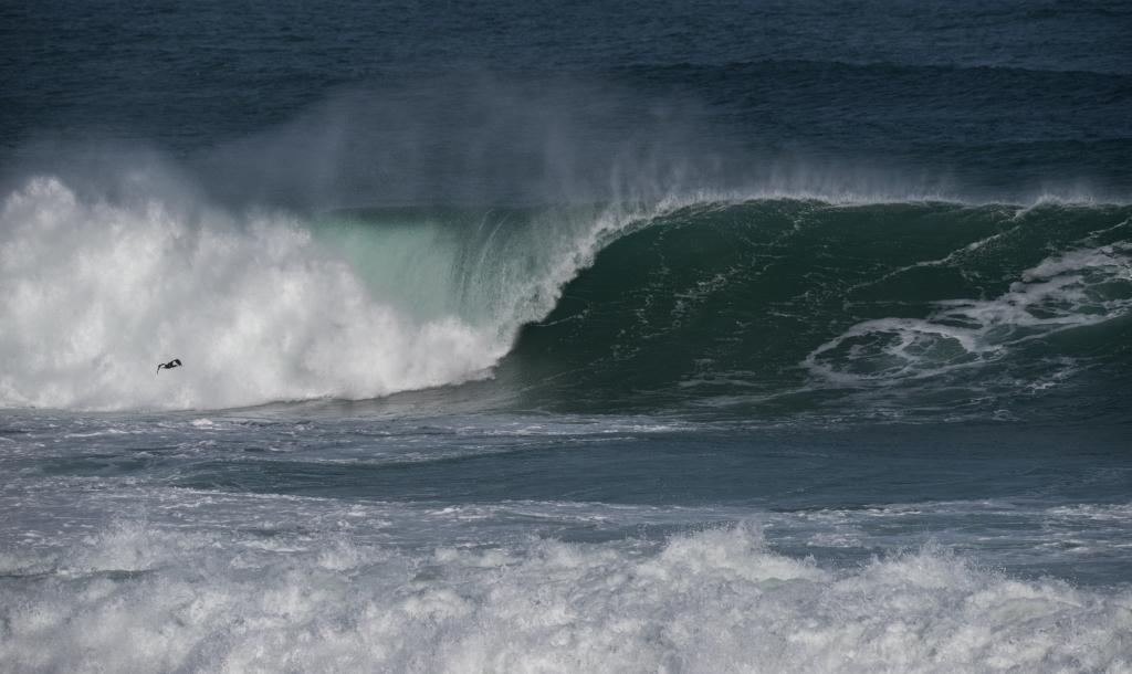 Cormorant flying near wave