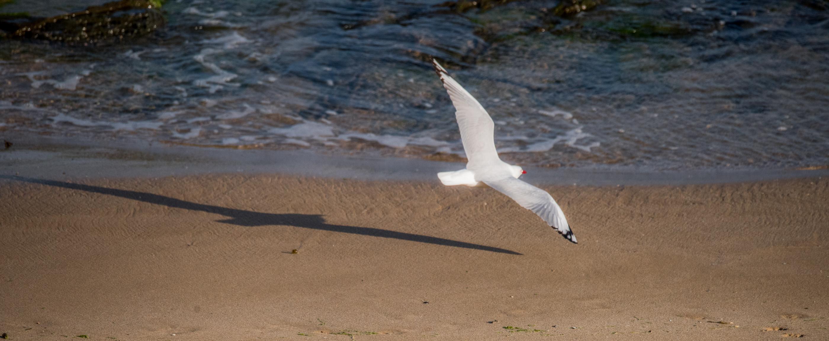 Seagull landing on beach