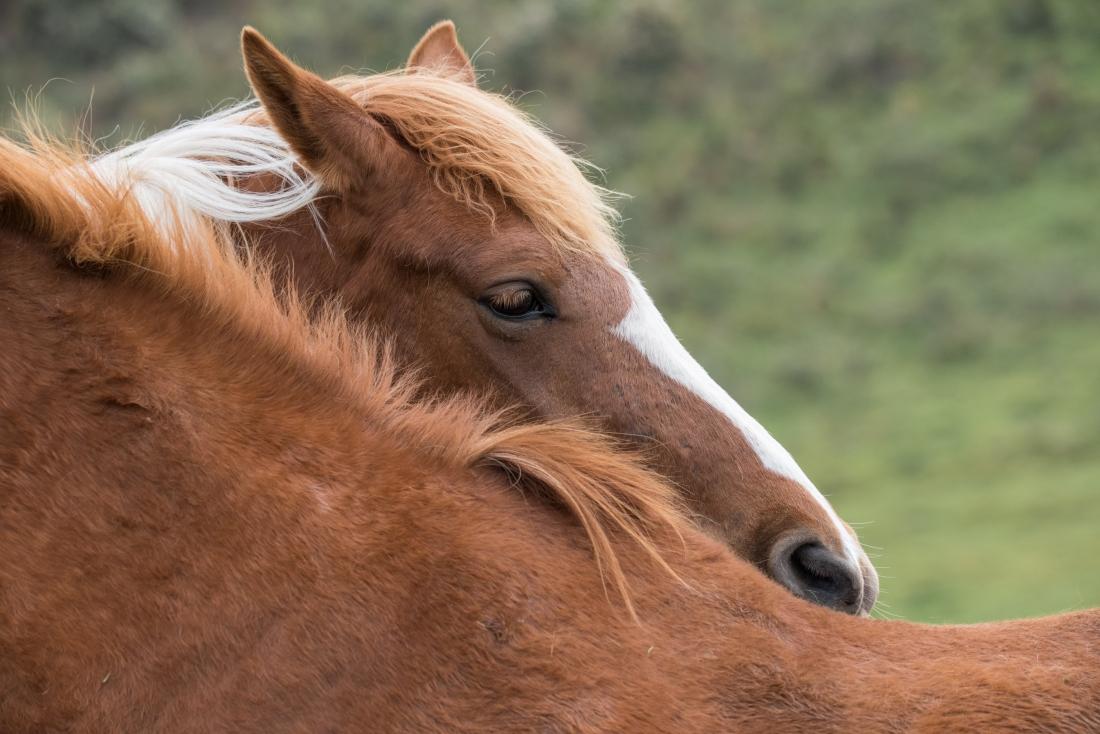 Horses at Apollo Bay