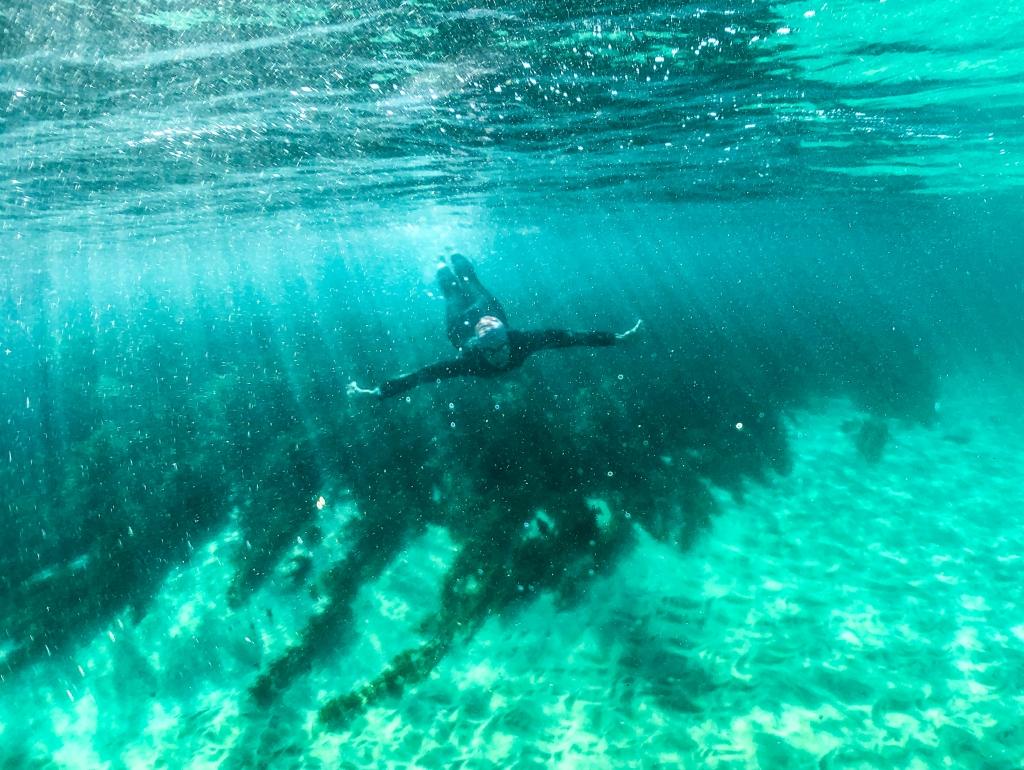 Underwater photo of swimmer at Marengo Reefs Marine Sanctuary, Little Henty Reef