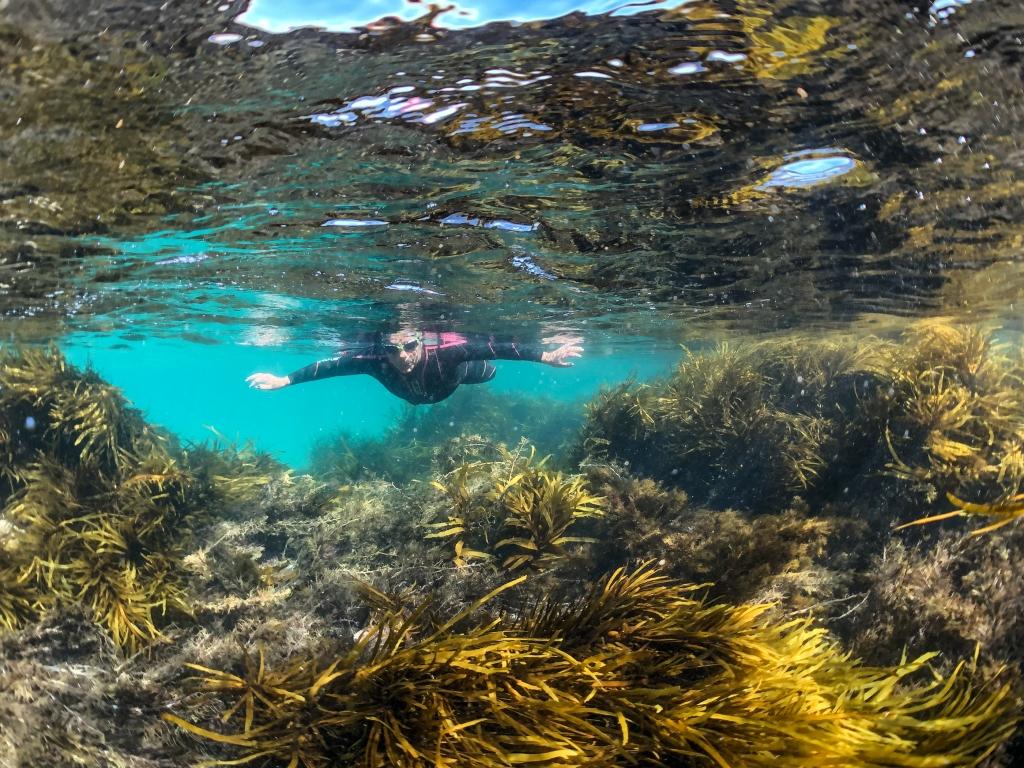 Swimming in marine plants at Marengo Reefs Marine Sanctuary, Little Henty Reef