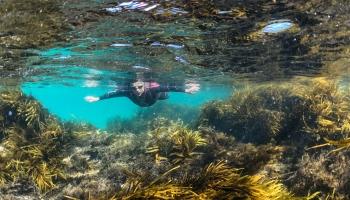 Swimmer in underwater kelp beds