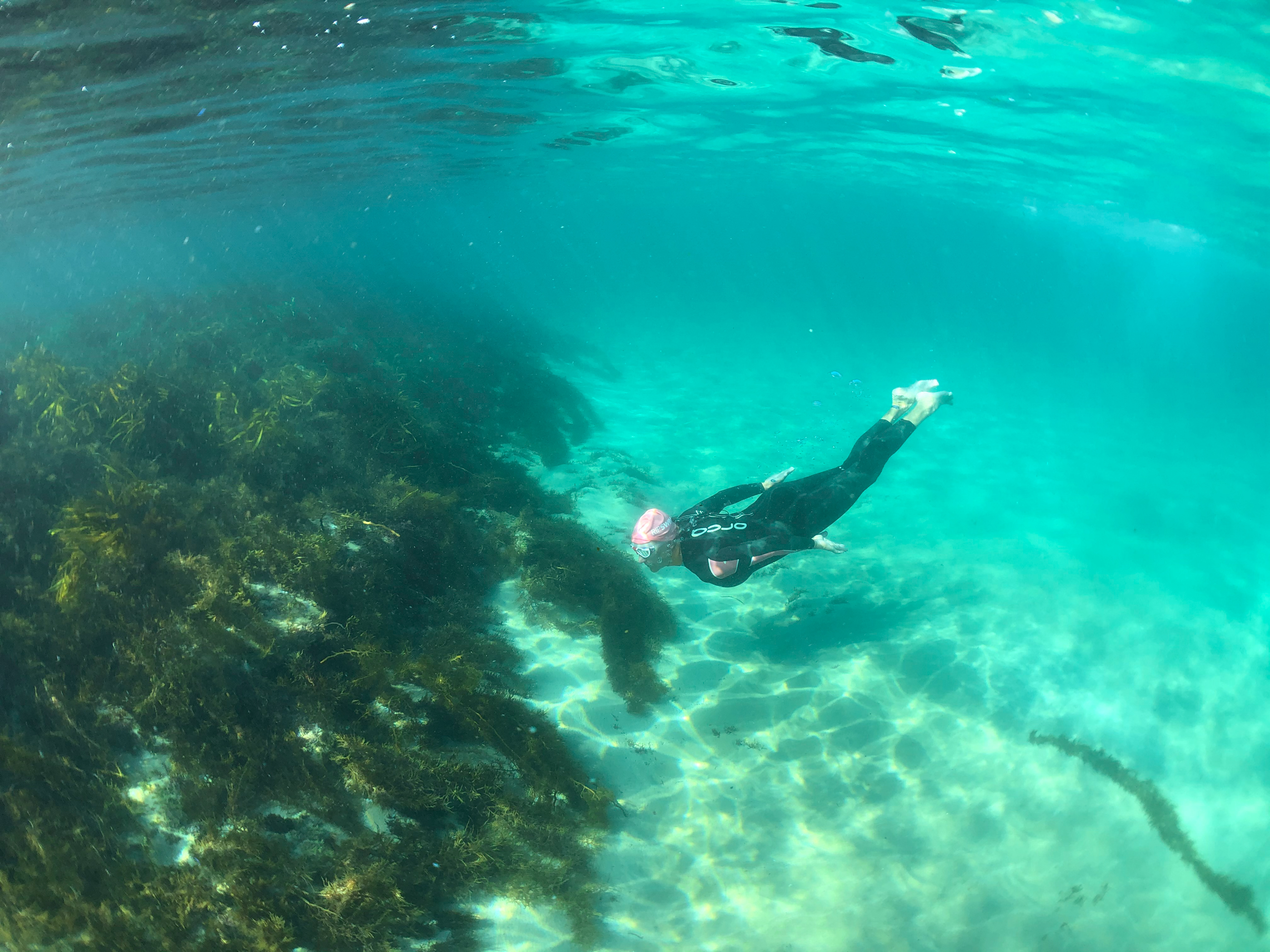 Free diving on reef in clear water Apollo Bay