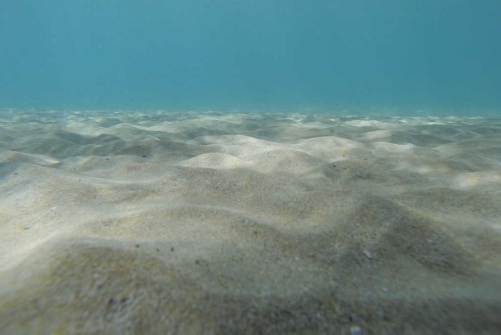 Marengo Reefs Marine Sanctuary underwater