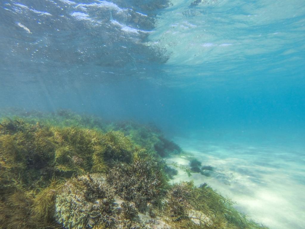 Little Henty Reef underwater