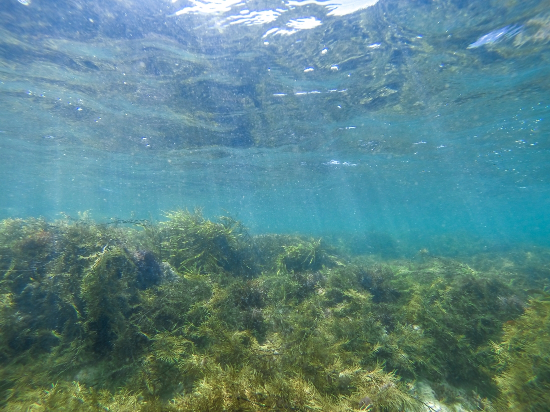 Underwater reef at Apollo Bay