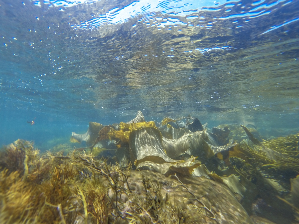Little Henty Reef underwater. Marengo Reefs Marine Sanctuary