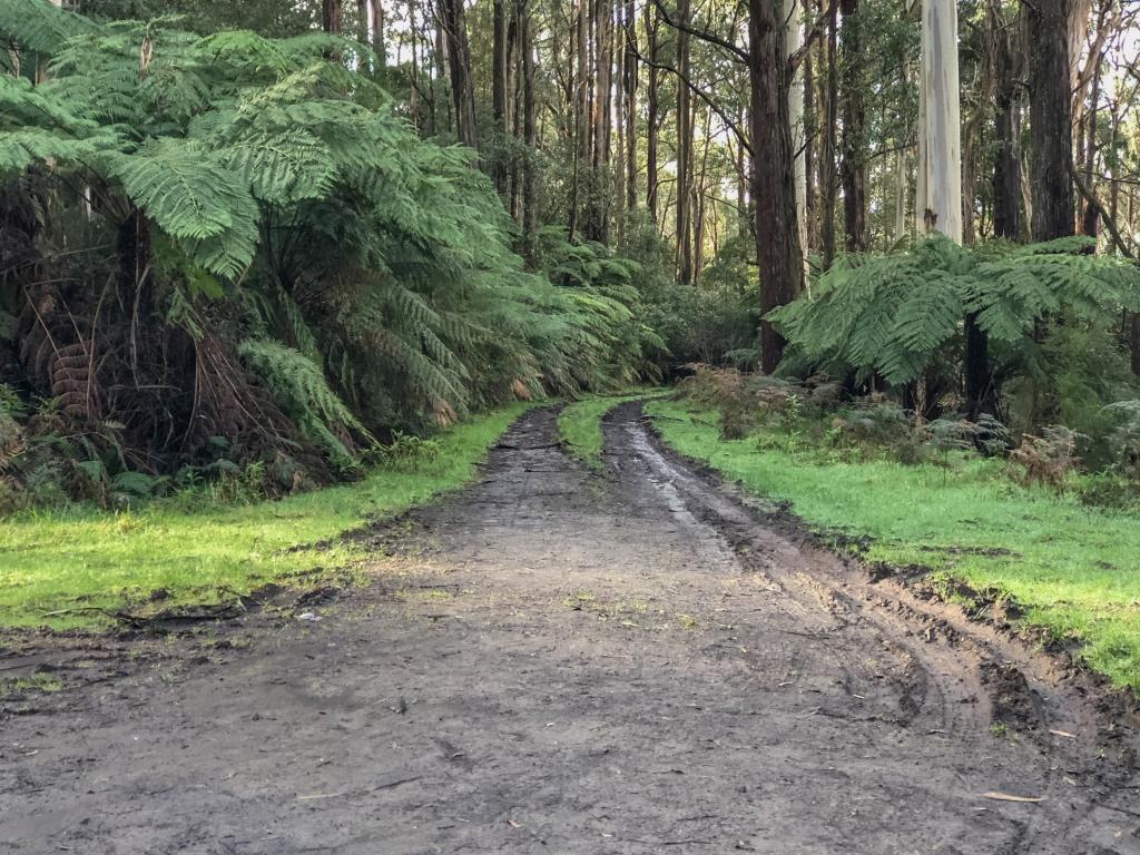 Muddy dirt track in Otway Ranges