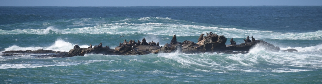 Seals and white water at Little Henty Reef