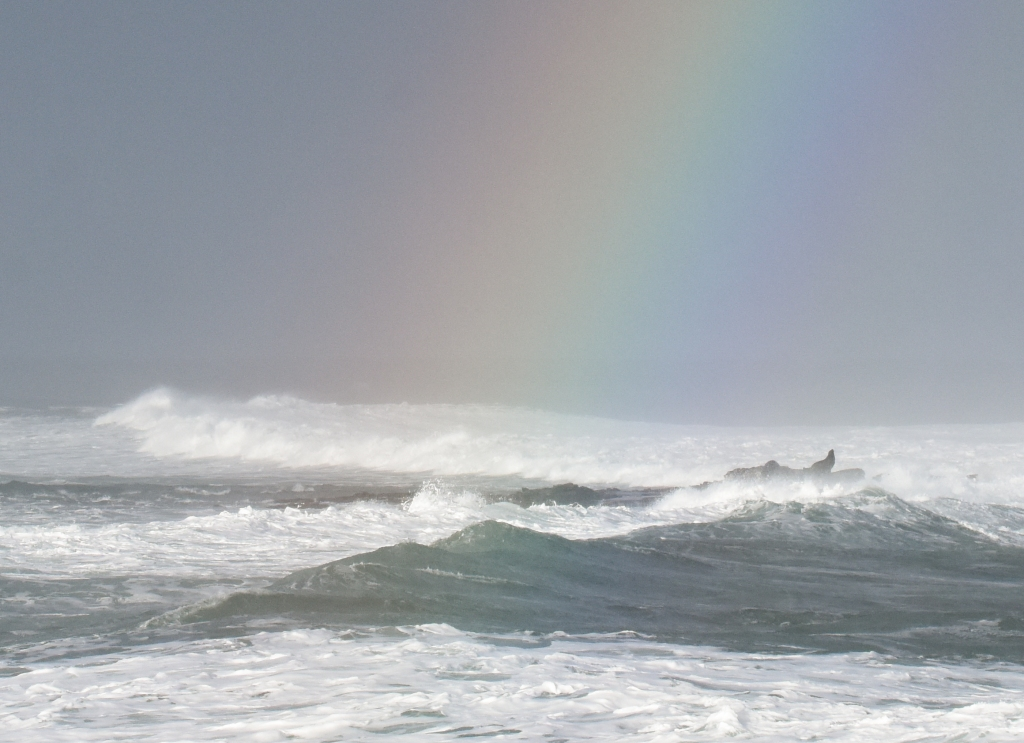 Seal and white water on reef with rainbow