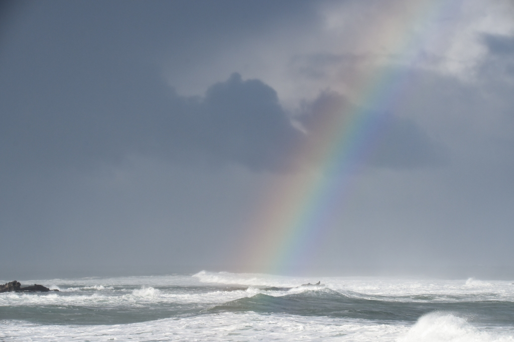 Seals and rainbow with white water all around