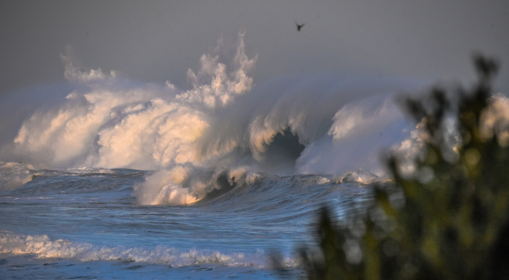 Breaking wave and bird at sunset