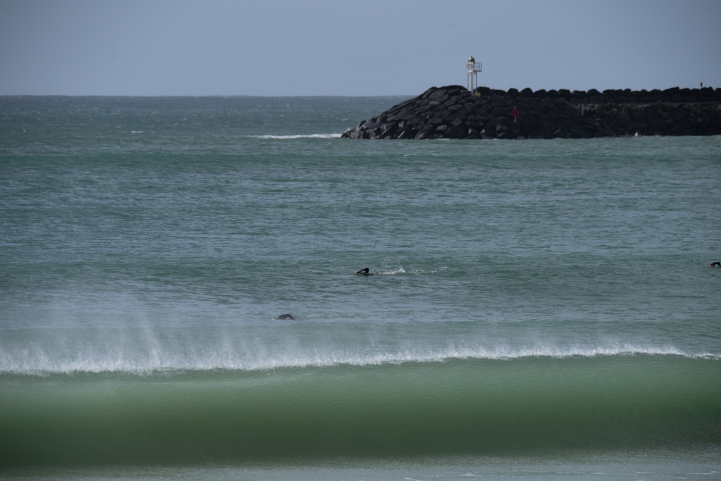Ocean swimmers at Apollo Bay