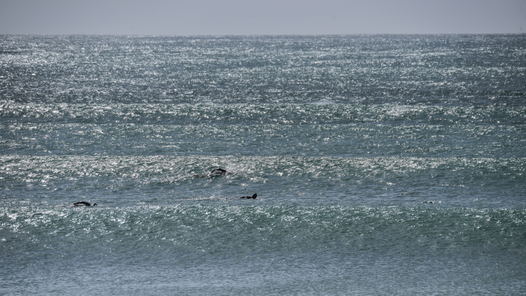 Ocean swimmers in swell at Apollo Bay